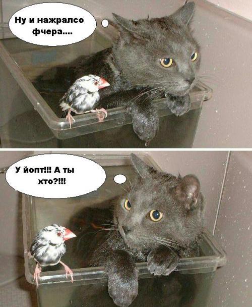 Приколы: Коты в картинках (далее 5 фото)