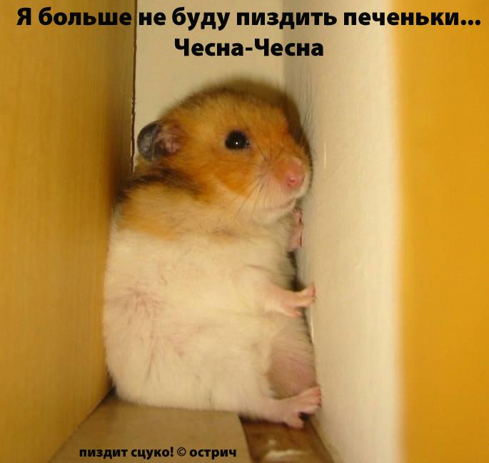 Приколы: Улыбнуло ;))
