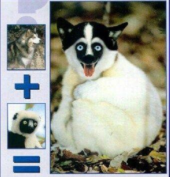 Приколы: Животные после фотошопа (далее 10 фото)
