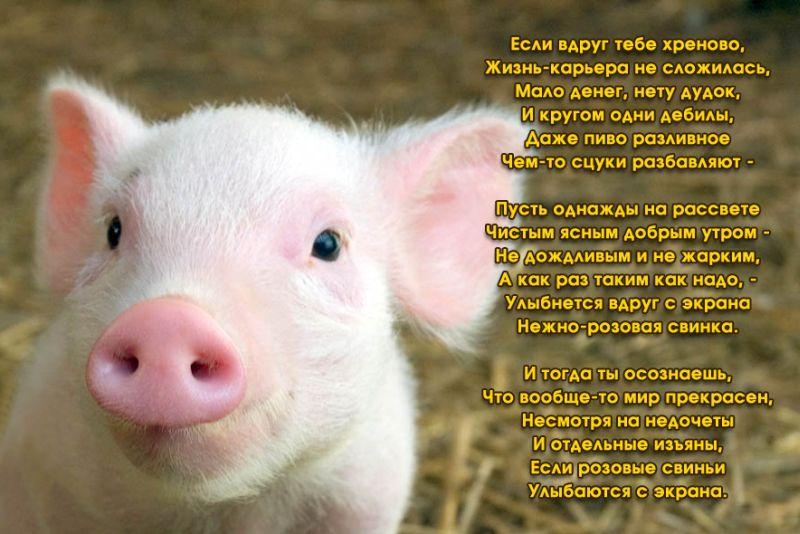 Приколы: Нежно-розовая свинка ;)