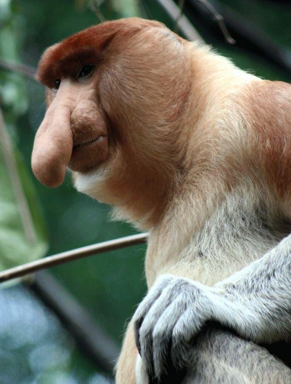 Приколы: Смешные обезьянки (14 фото)