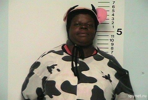 Приколы: Толстая корова показала свои сиськи полиции