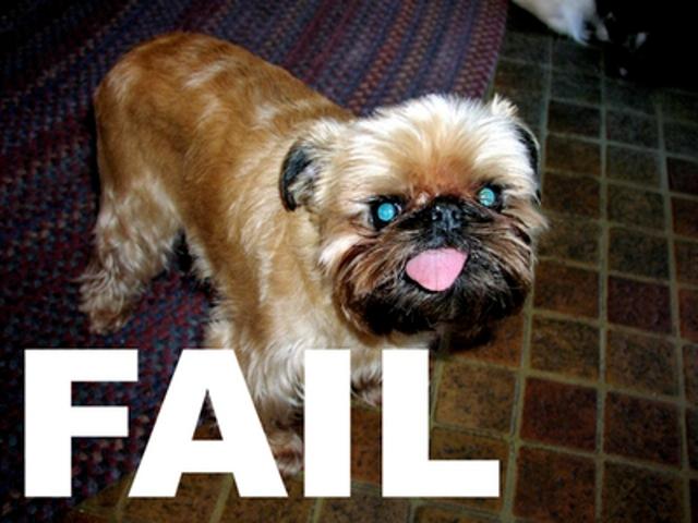 Приколы: Собаки неудачники (12 фото)