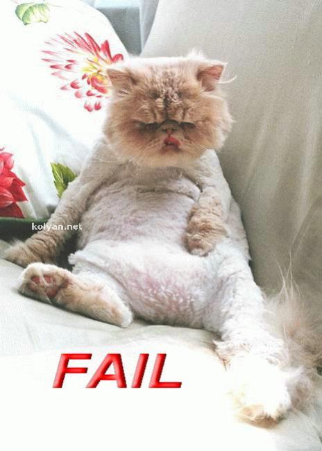 Приколы: Коты - недуачники (14 фото)