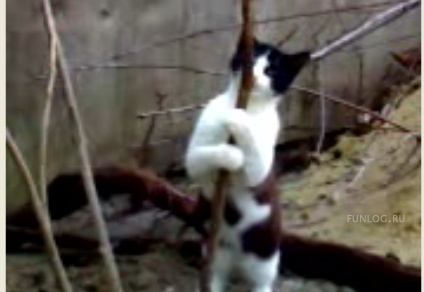 Приколы, Видео: Бедный кошак