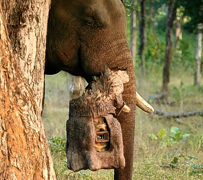 Приколы: Слон шпион (8 фото)