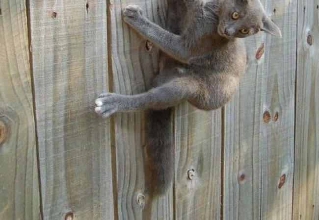 Приколы: Кот неудачник (2 фото)