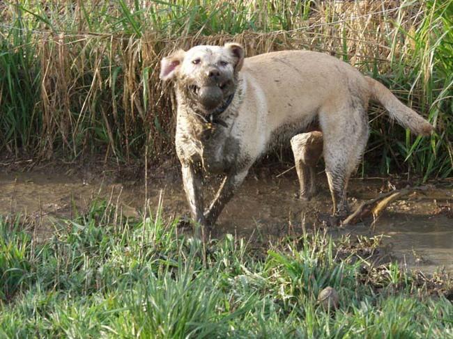 Приколы: Собакосвиньи (8 фото)
