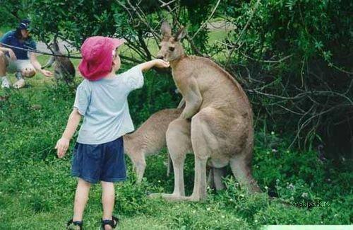 Приколы: 7 причин не ходить с детьми в зоопарк (7 фото)