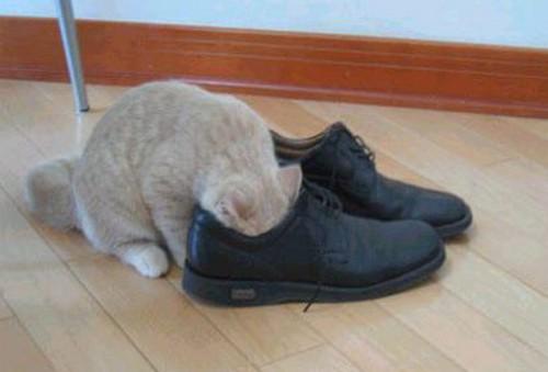 Приколы: Вонь сразила котика наповал (3 фото)