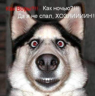 Приколы: Говорящие животные (11 фото)