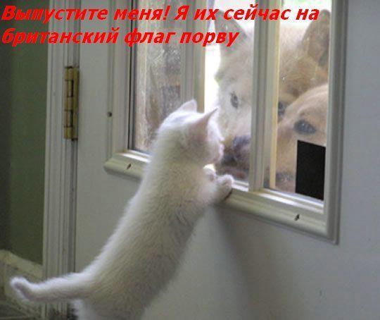 Приколы: Если бы коты умели говорить (38 фото)
