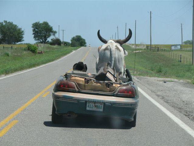 Приколы: Техасские кабриолеты (4 фото)
