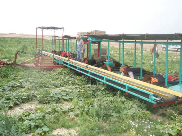 Приколы: Комбайн по уборке огурцов в Белорусии (16 фото)