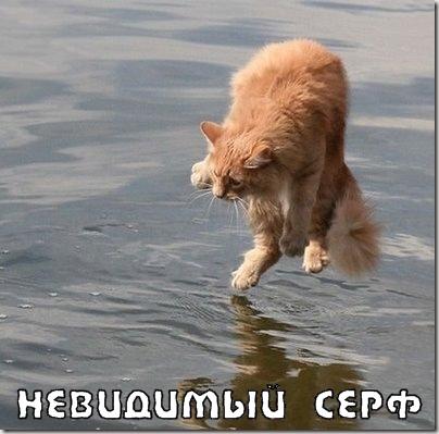 Приколы: Коты и невидимые предметы (22 фото)