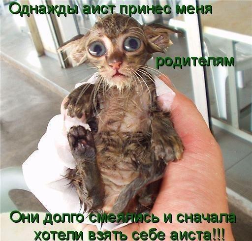 Приколы: Смешная животинка (31 фото)