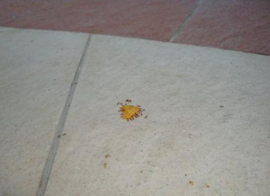 Приколы: Муравьи и чипсы! (15 фото)