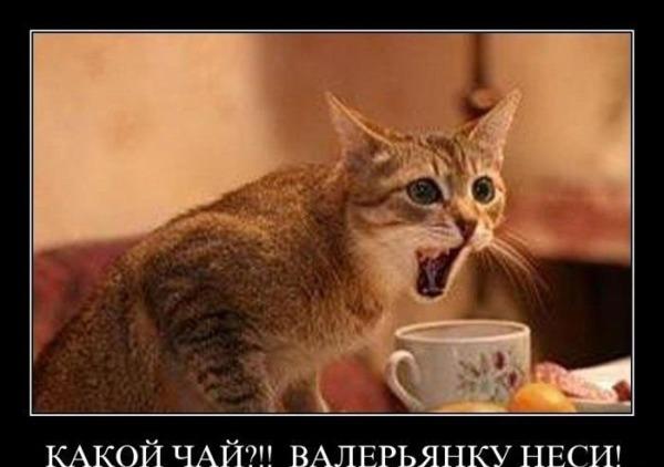 Приколы: Демотиваторы )))))