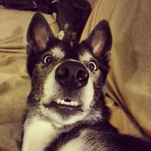 Девушки: Позитив с собачками