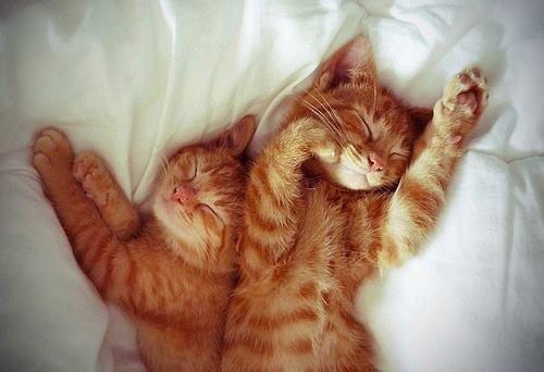 Девушки: Котики