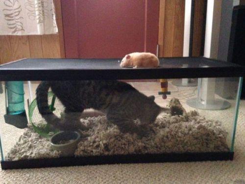 Девушки: Котики умиляют